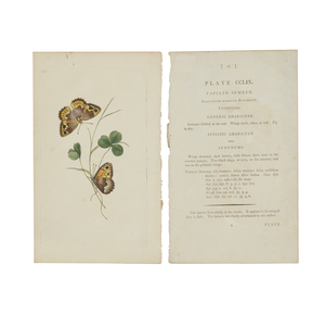 Six Book Engravings of Butterflies