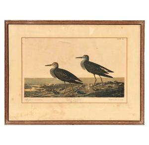 1860 Audubon