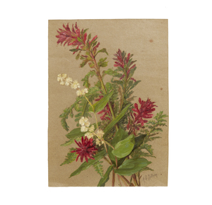 Alice Brown Chittenden (1859-1944) Oil on Paper Painting