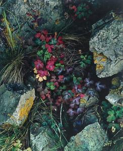 Eliot Porter (1901-1990), Untitled