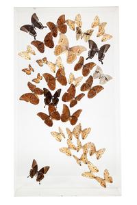 Steven Albaranes Butterfly Wall Art