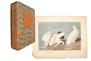 After John James Audubon, American Ptarmigan and White-tailed Grouse and The Original Water-Color Paintings by John James Audubon for The Birds of America